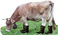 la-vaca-con-botas
